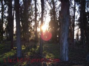Love the smell of eucalyptus
