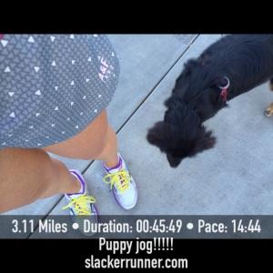 puppy jog